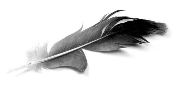 پر Feather