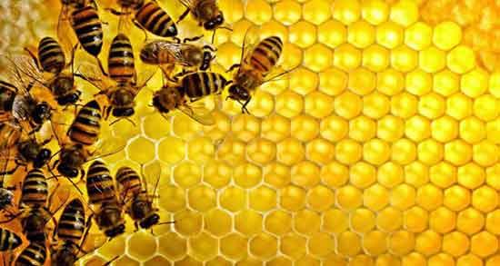 تعبیر خواب عسل و کندوی عسل ، بزرگ و با موم در خواب های ما چیست